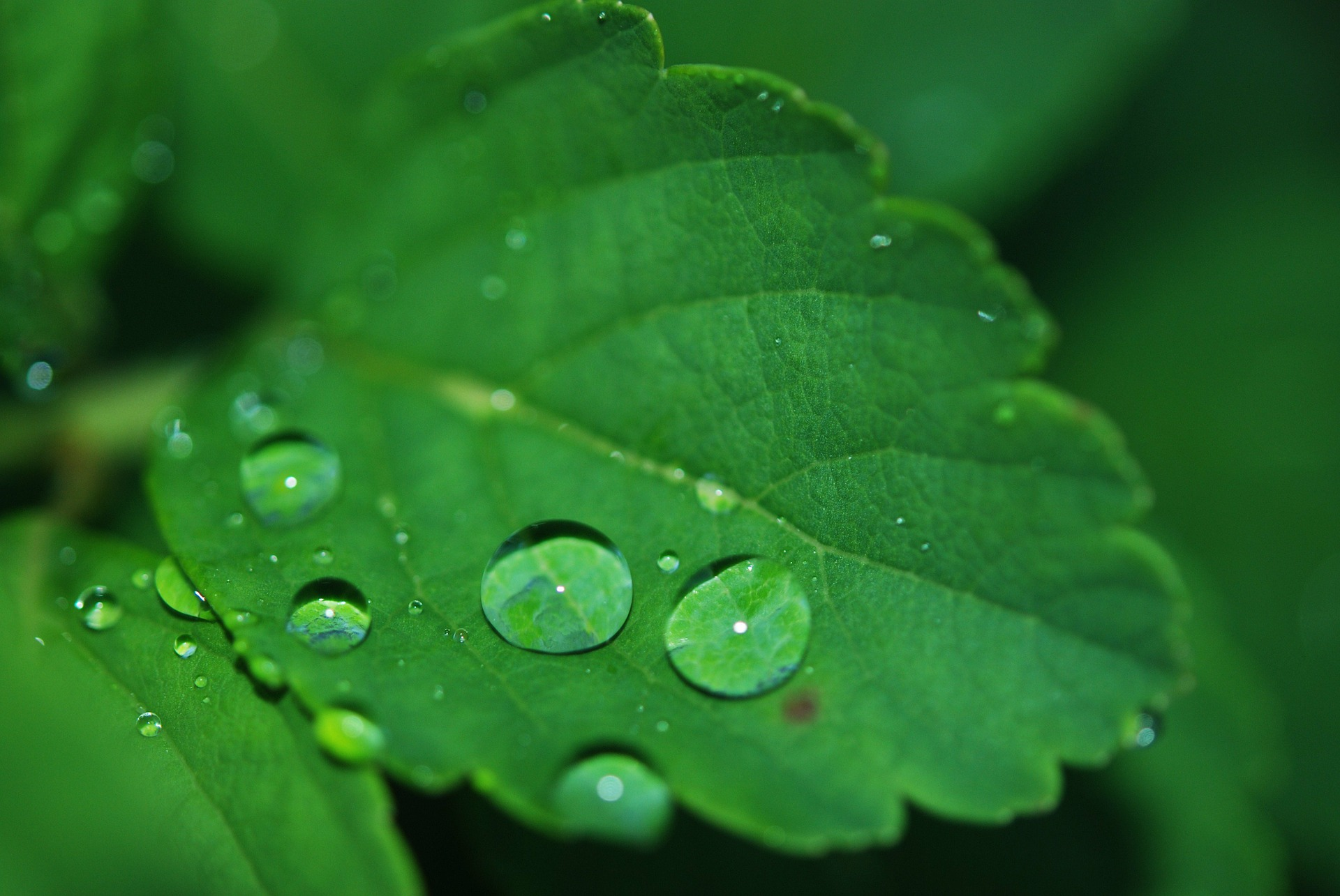 Plant Chemistry: A Concerted Chemical Process