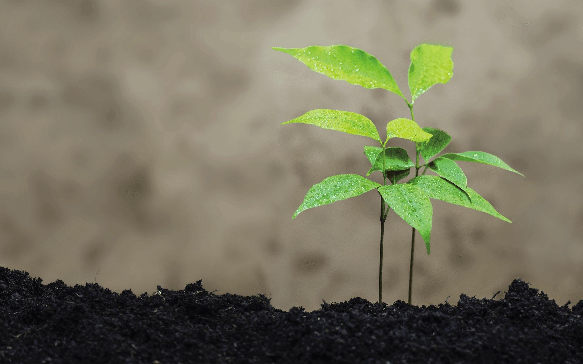 Plant Chemistry: An Internal Battle For Survival